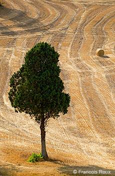 lonely tree alpes provence