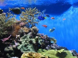 Photograph of an aquarium in Paris