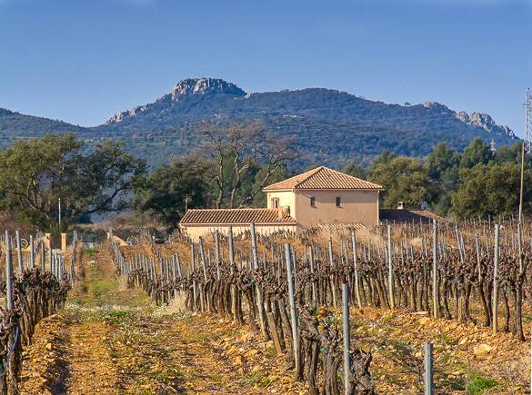 Image of a vineyard in Provence