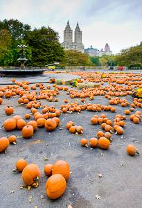 Picture of pumpkins in Central Park, New York City