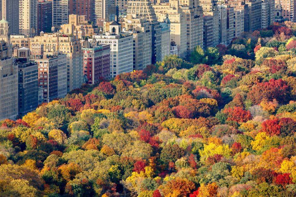 Image of an overview of fall trees