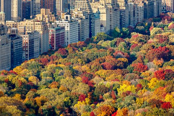 Image of aerial view of Autumn trees in Central Park