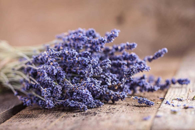 Foto eines Lavendelbündels aus der Provence