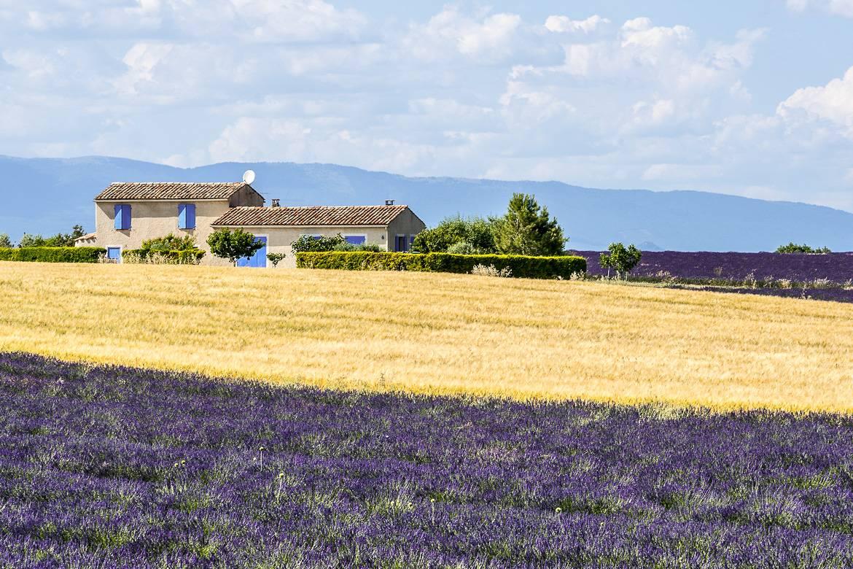 Foto von einem Lavendelfeld in der Provence, Frankreich