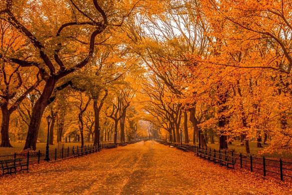Bild eines mit Bäumen gesäumten Weges mit orange gefärbten Blättern.