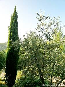 South of France - Provence - 4 Bedroom - Villa accommodation - bedroom 4 (PR-692) photo 6 of 7