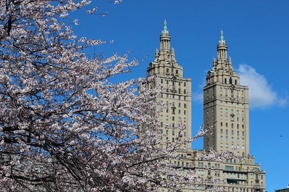 Edificios cercanos a la Universidad de Columbia con flores en primer plano