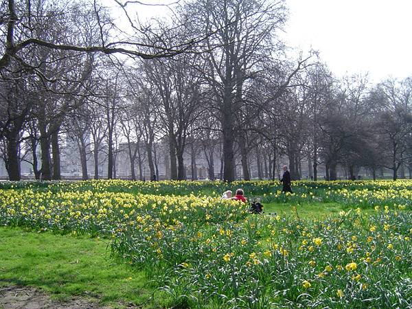 Rainy day spot #3: Green Park on a Gray Day in London