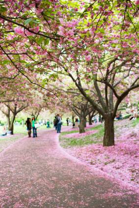 New York's Own Green Getaway: The Brooklyn Botanic Garden