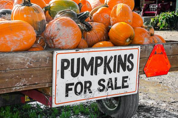 """Image of a pile of pumpkins in a wagon with a sign reading """"pumpkins for sale"""""""