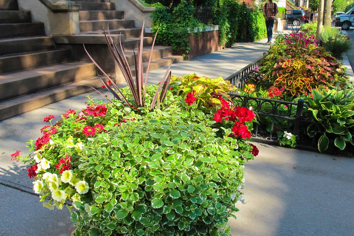 Image of planter and sidewalk garden bursting with greenery