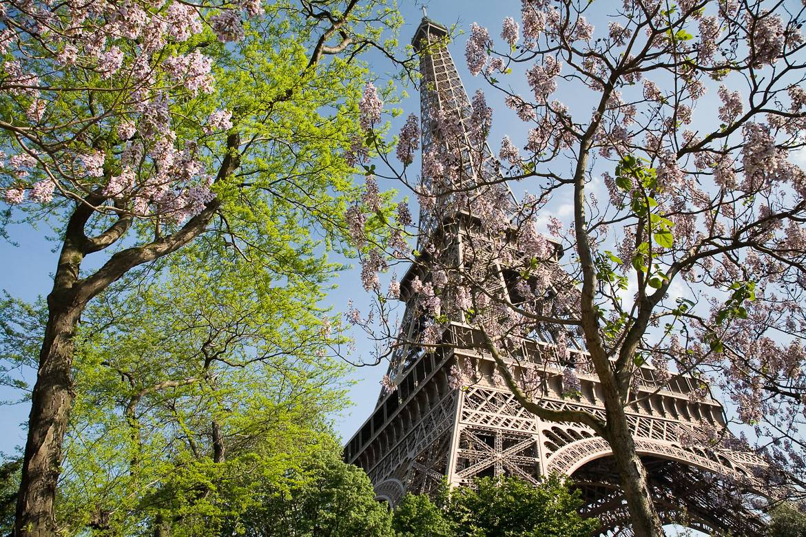 Image of the Eiffel Tower with pink spring flowering trees