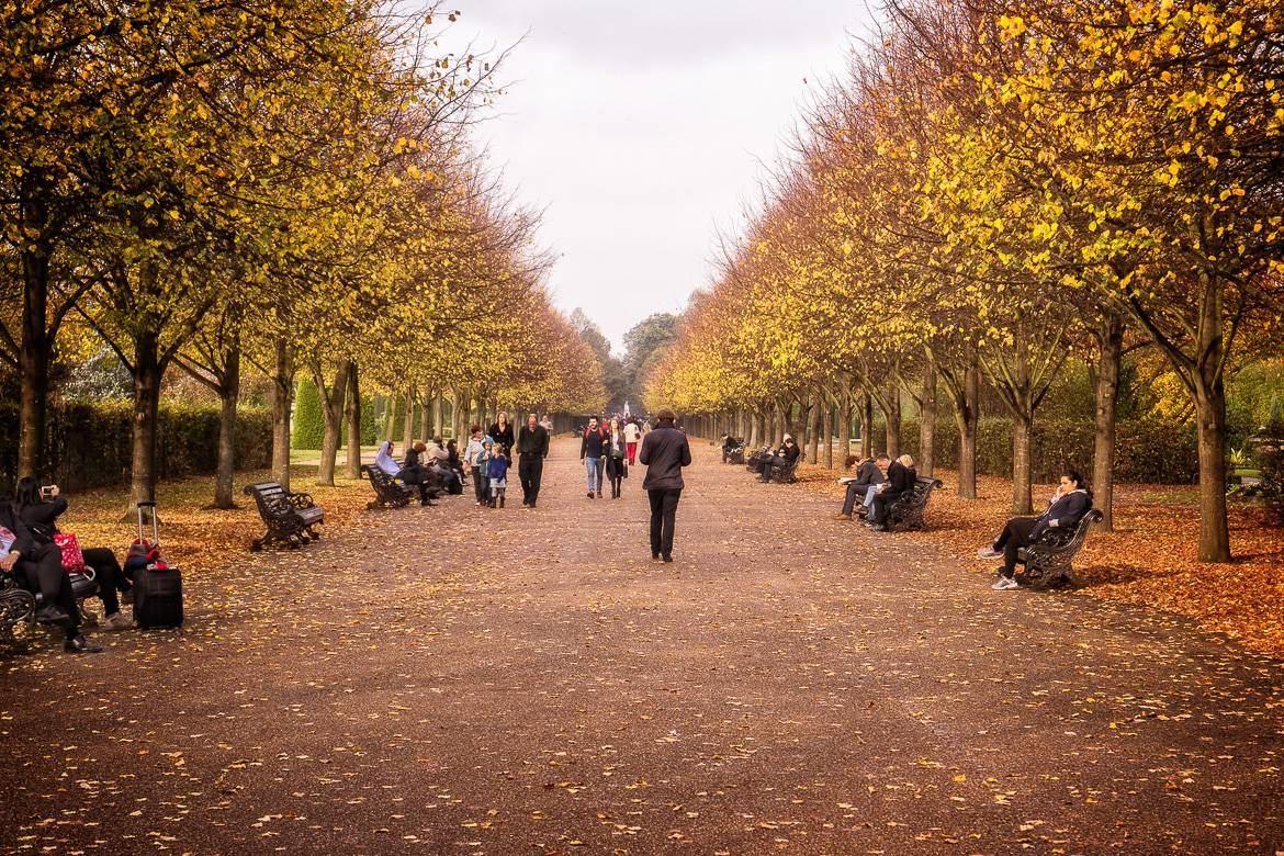 Image of a tree-lined path in Regent's Park in autumn.