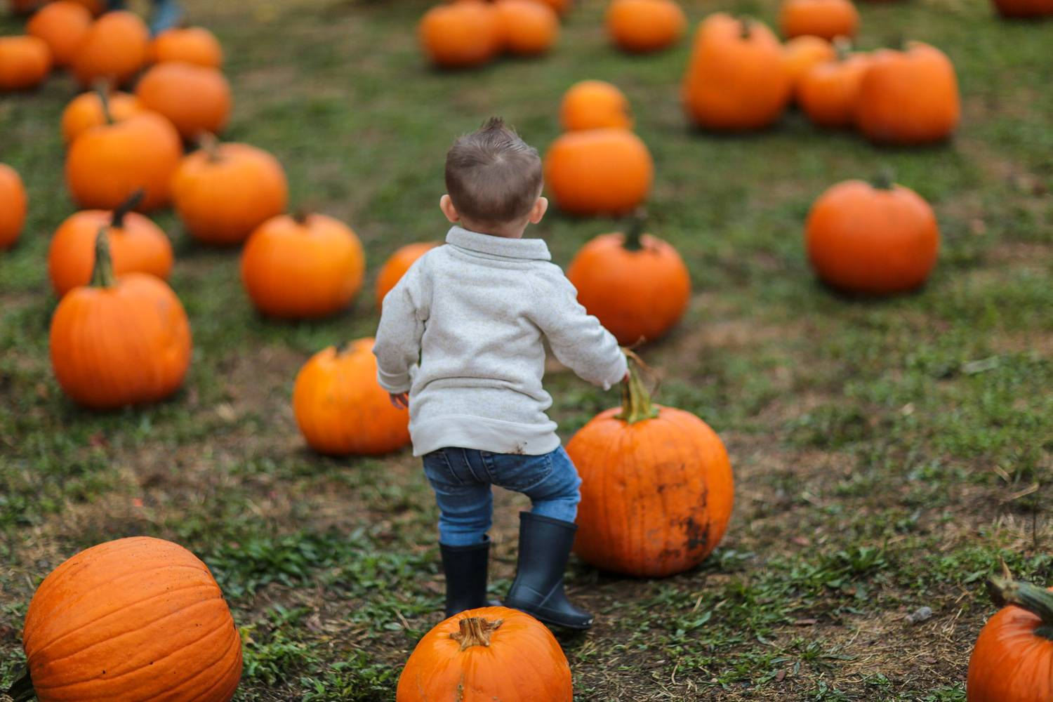 An image of a child roaming a pumpkin patch during the fall season.