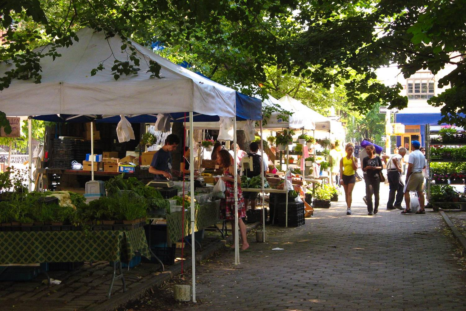 Image of the Fort Greene Park Greenmarket in Brooklyn with rows of stalls along a shaded pathway.