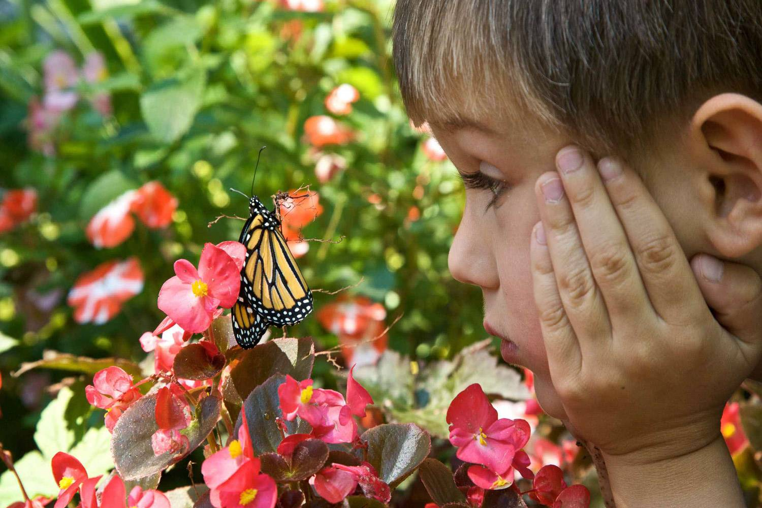Image of child looking at a butterfly up close (Photo credit: PIXNIO)