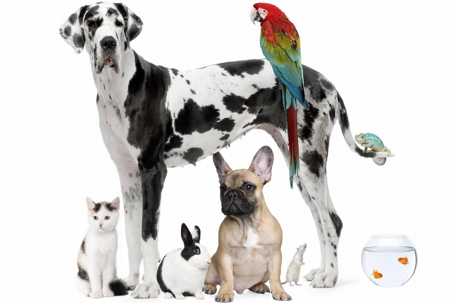 Image of a group of animals including dog, rabbit, fish, cat, mouse and bird. (Image credit: wallpaperplay.com)