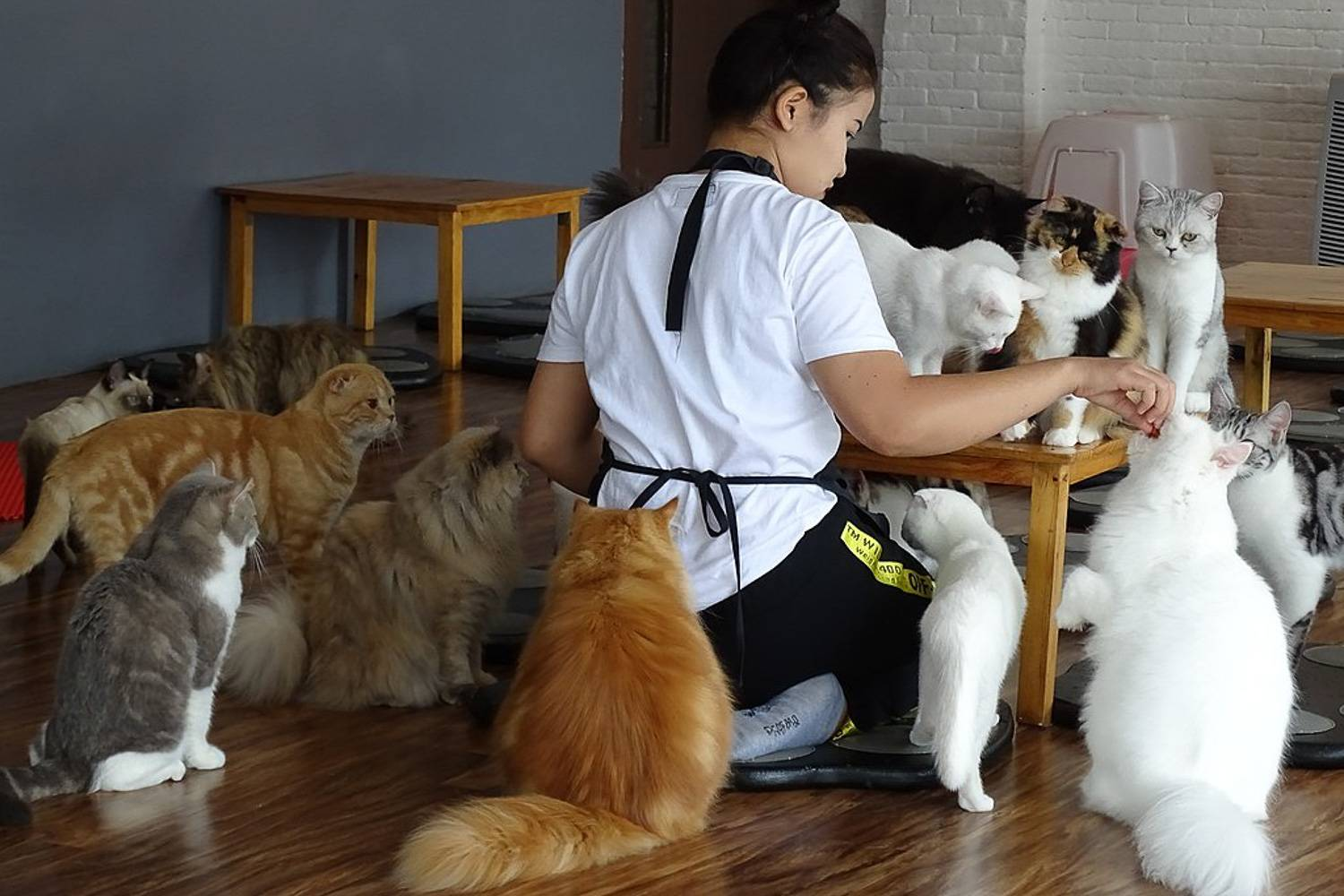 Image of waiters surrounded by cats at a table of a cat cafe. Image credit: Adam Jones [CC BY-SA 2.0 (https-//creativecommons.org/licenses/by-sa/2.0)]