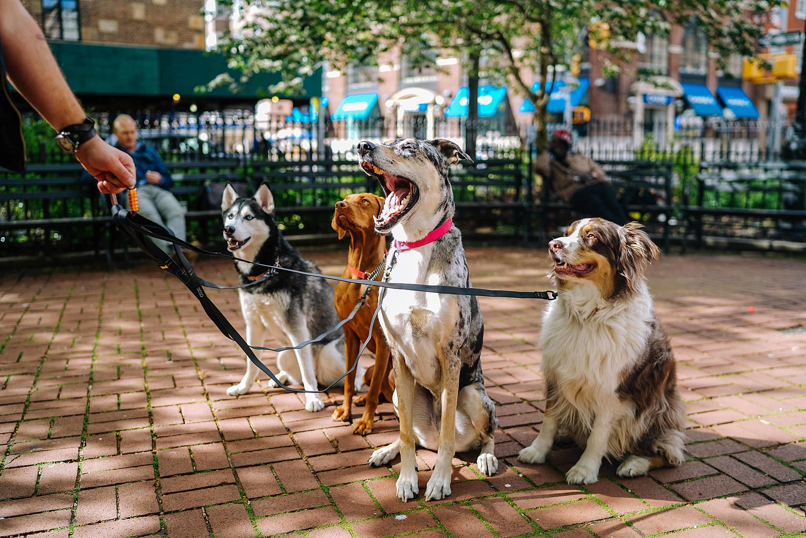 Image of four dogs sitting in a NYC dog park, the center one yawning (Image credit: Unsplash)