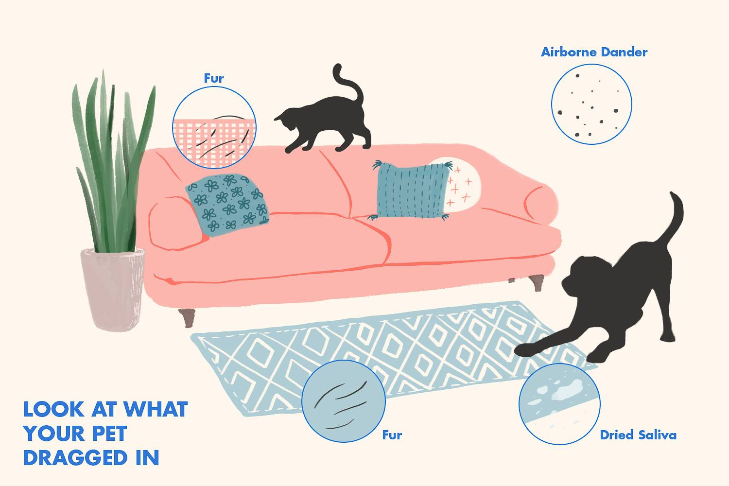 Infographic of causes of pet allergies