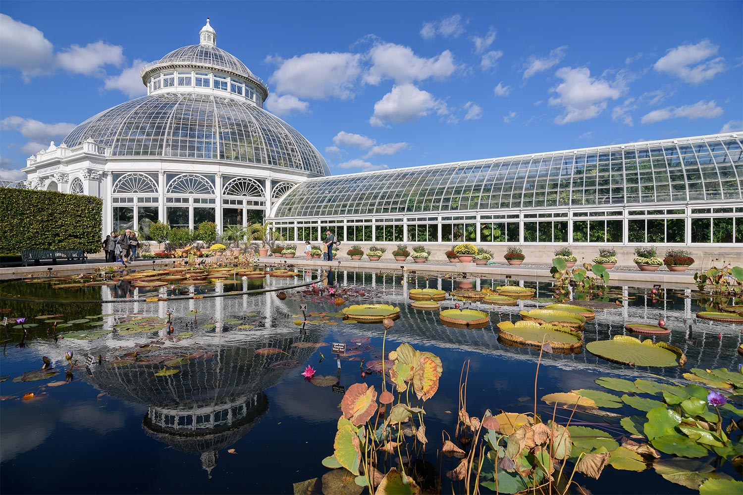 Image of a botanical garden greenhouse with a pond in the foreground and water lilies