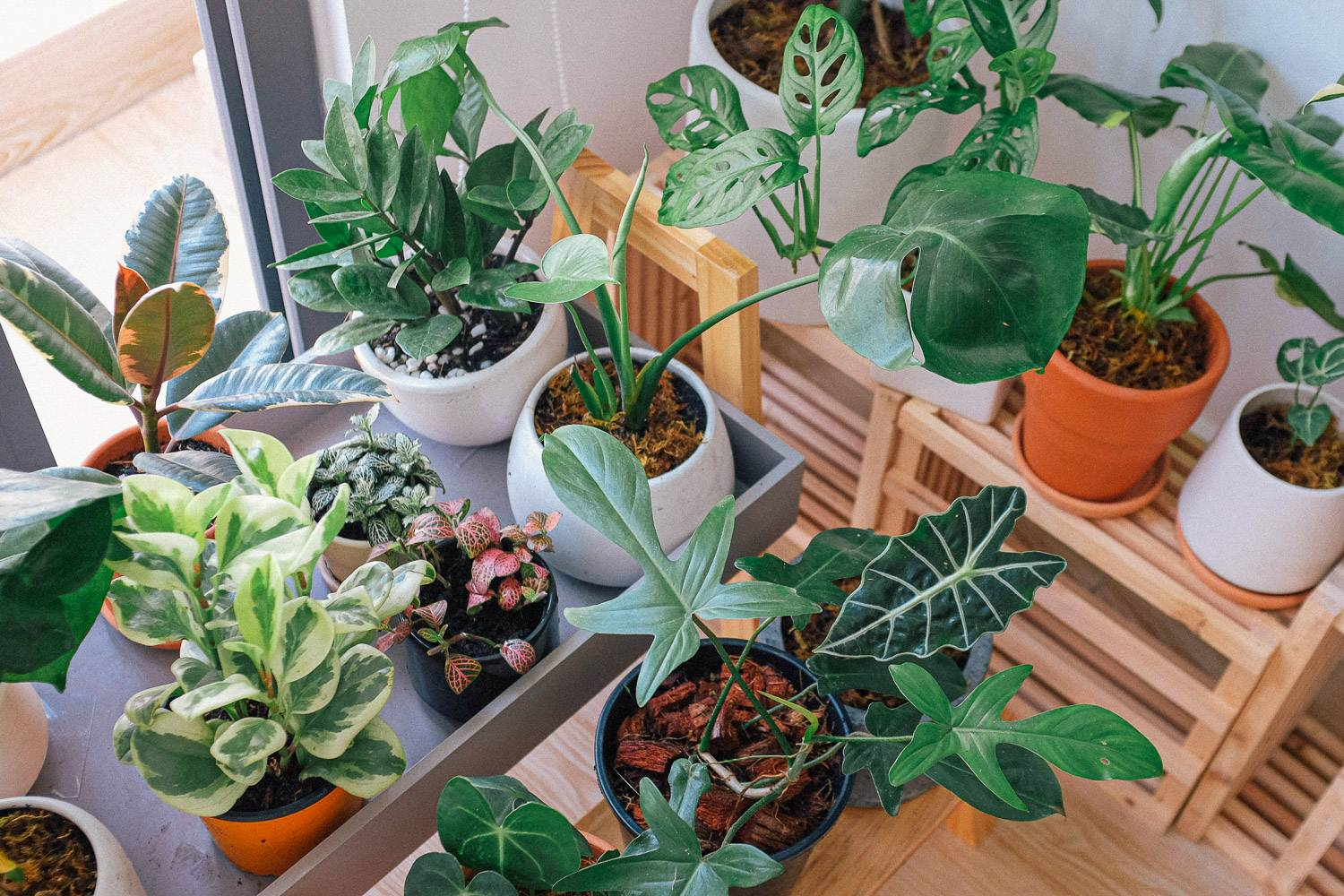 Image of various small potted green plants indoors