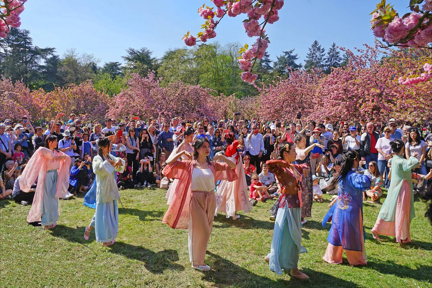 Image of traditional dancers at the Japanese Hanami festival at Paris' Parc de Sceaux sur-rounded by cherry blossom trees and a crowd of spectators