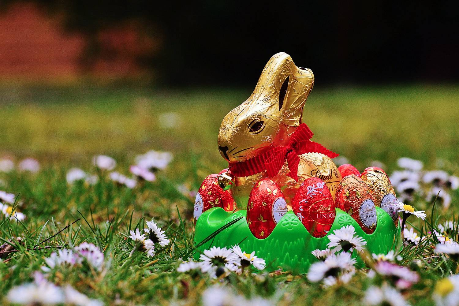 Image of a Lindt chocolate bunny laying on the grass and surrounded by chocolate eggs