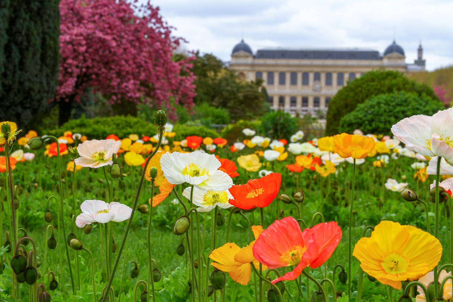 Flowers and trees in bloom at the Jardin des plantes in Paris, with the Grande Galerie de L'Evolution in the background.