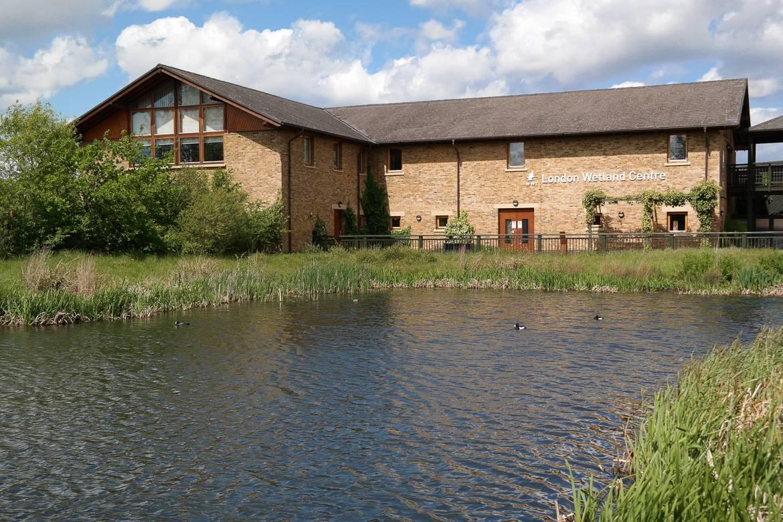 Bild vom London Wetland Centre mit Sumpf und Enten auf dem Wasser