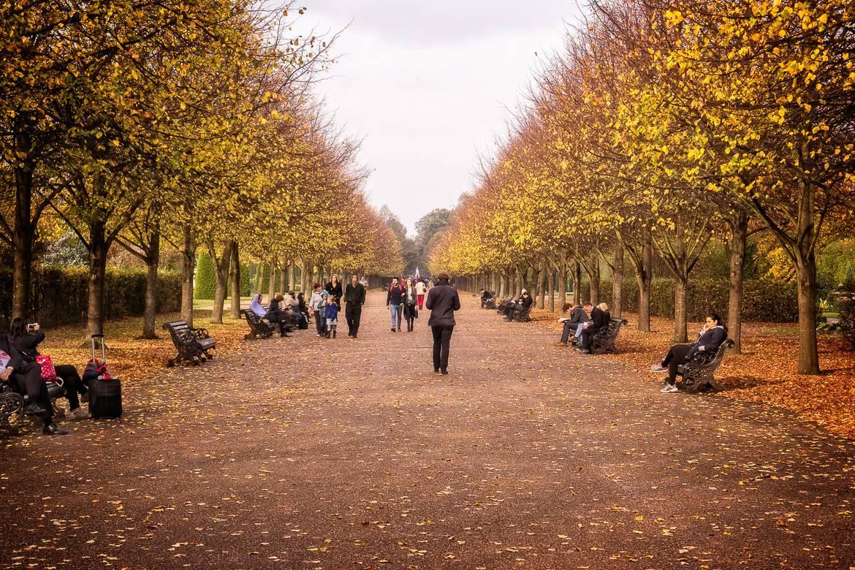 Bild eines von Bäumen umgebenen Gehwegs im Regent's Park im Herbst.
