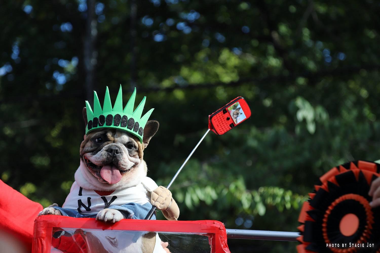 Ein Bild eines süßen Mops, eingekleidet in New York City-Erinnerungsstücken während der Tompkins Square Park Halloween Dog Parade.