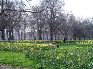 Wo man ist, wenn es regnet # 3: Green Park an einem grauen Tag in London