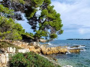 Ein Bild von Kiefern und Eukalyptus Bäumen auf der Insel Saint-Marguerite