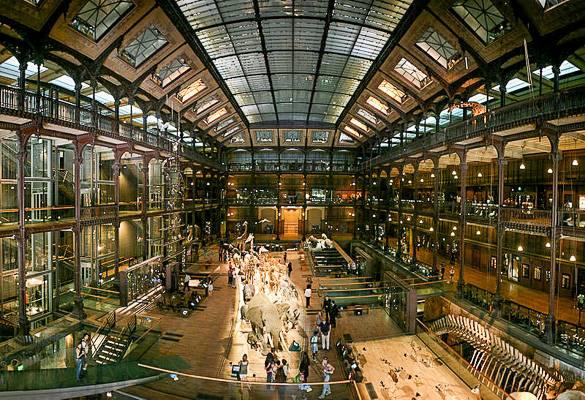 Bild der großen Galerie der Evolution im Naturkundemuseum in Paris