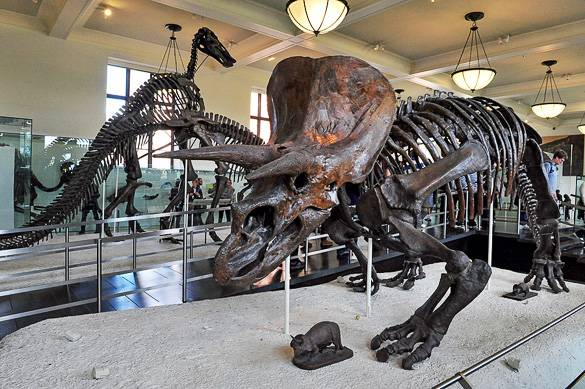 Bild eines Dinosaurierskeletts im American Museum of Natural History in NYC