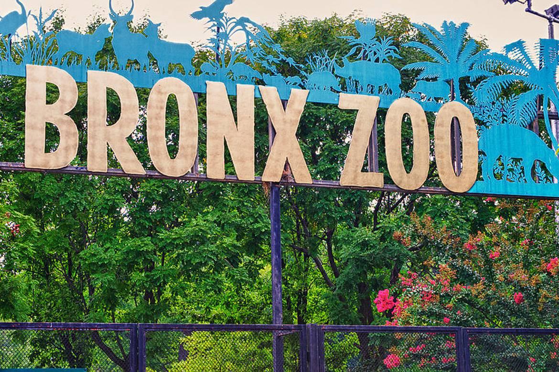 Bild vom Bronx Zoo.