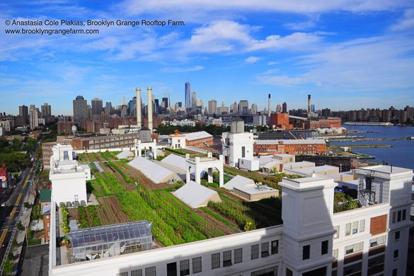 Bild von Manhattan von Brooklyn aus gesehen