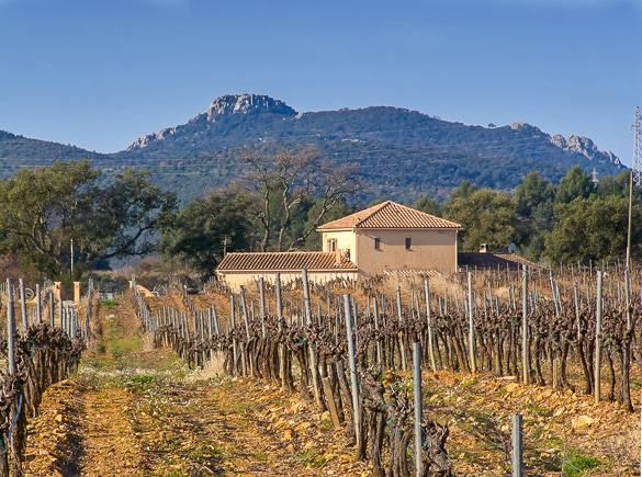Photo d'un vignoble provençal l'hiver
