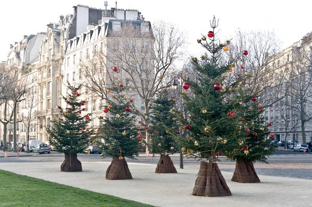 Photo de sapins de Noël alignés devant des bâtiments typiquement parisiens