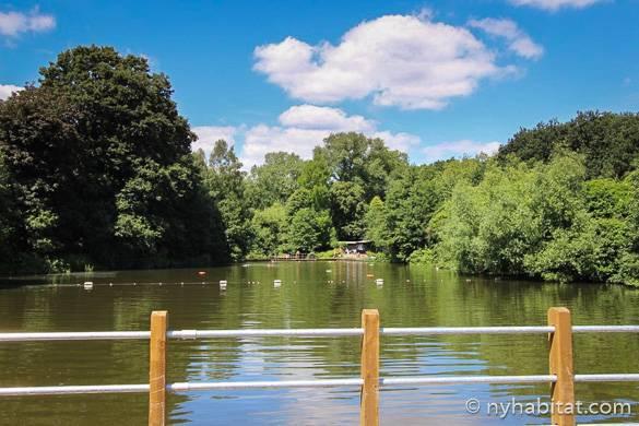 Photographie d'un bassin de baignade entouré d'arbres dans le parc de Hampstead Heath
