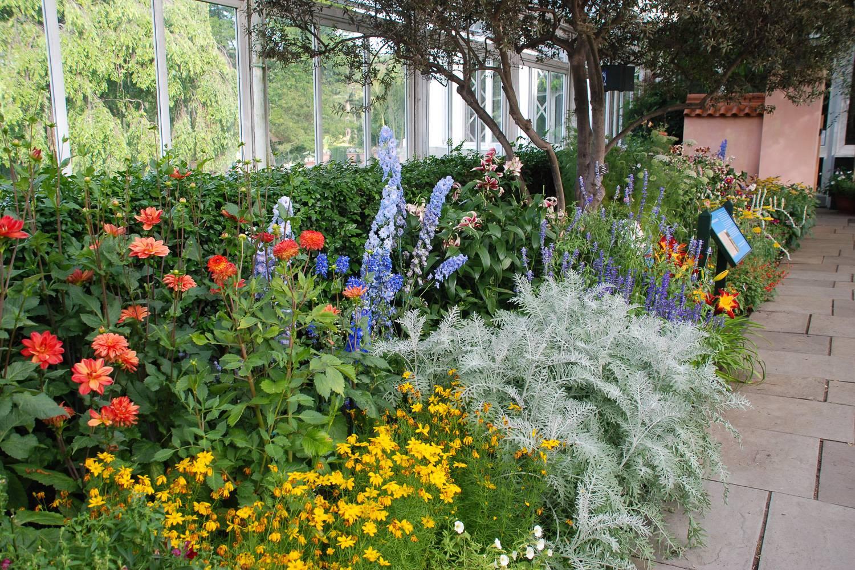 Photo de fleurs dans la serre Enid A. Haupt du jardin botanique de New York.