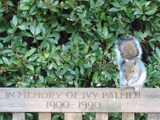 Primavera a Londra: le meraviglie nascoste di Hyde Park