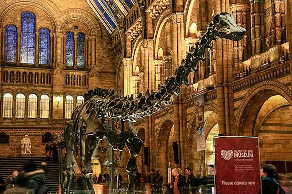 Immagine del Natural History Museum a Londra