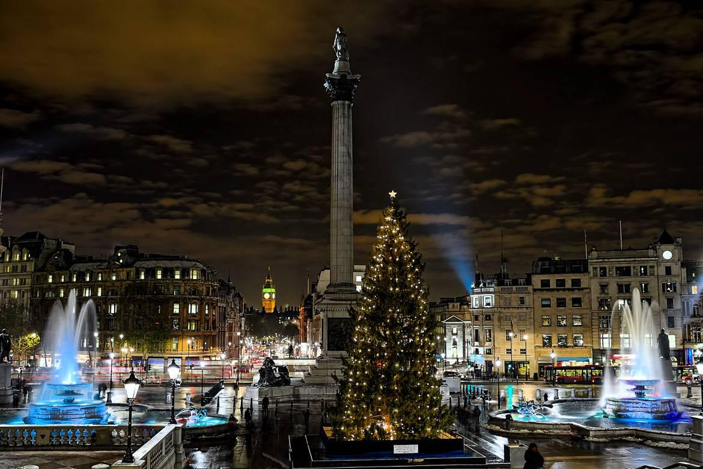 Il gigantesco albero di Natale di Trafalgar Square, Londra.