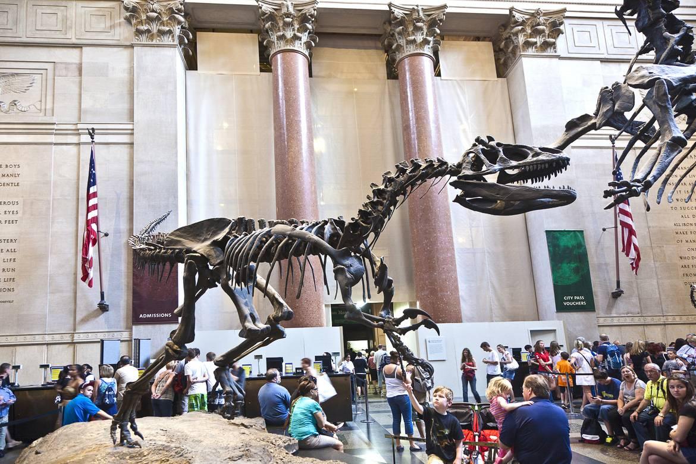 Immagine del Museo Americano di Storia Naturale