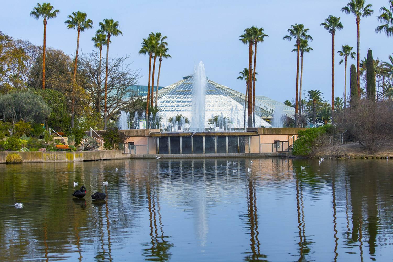 Immagine di uno stagno e della serra in vetro circondata da palme a Parco Phoenix a Nizza.