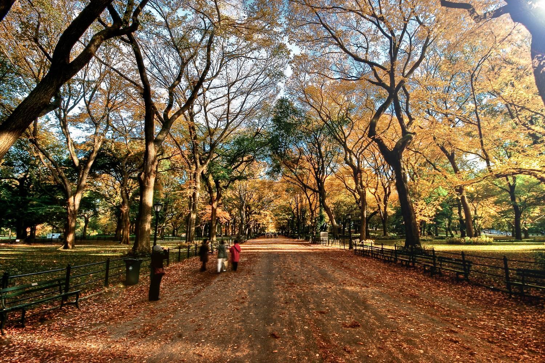 Immagine del sentiero pedonale di Central Park incorniciato da alberi con foglie autunnali.