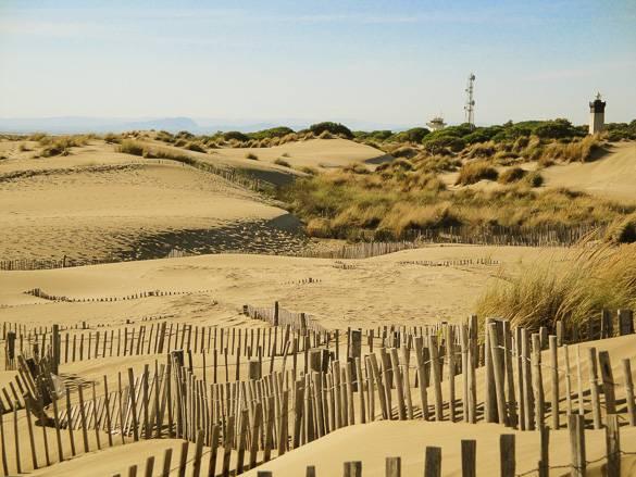 Imagen de las dunas en la playa de l'Espiguette cerca de Montpellier