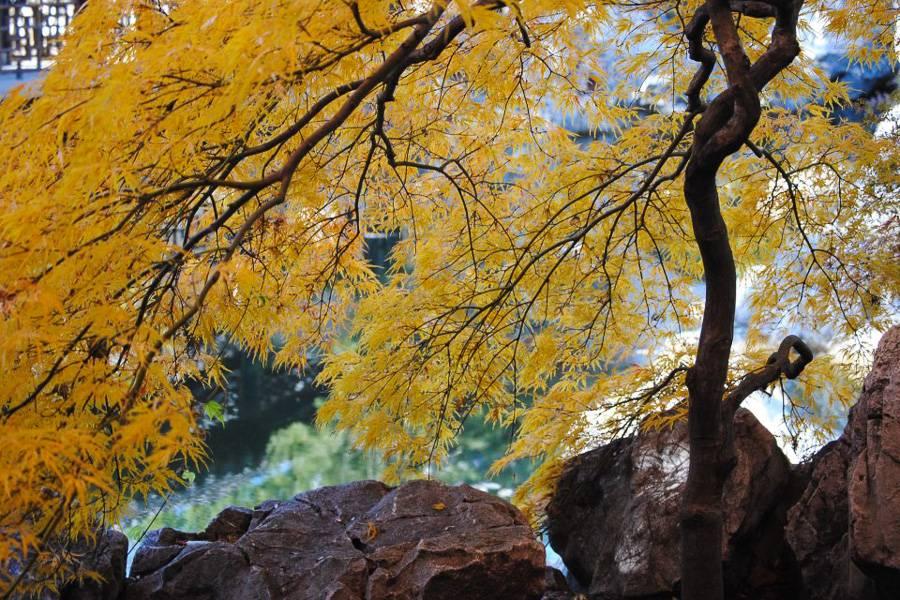 Foto de un árbol de Staten Island